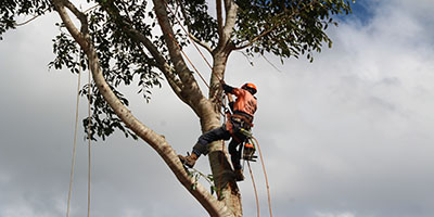 Tablelands Tree Lopping Fully Insured