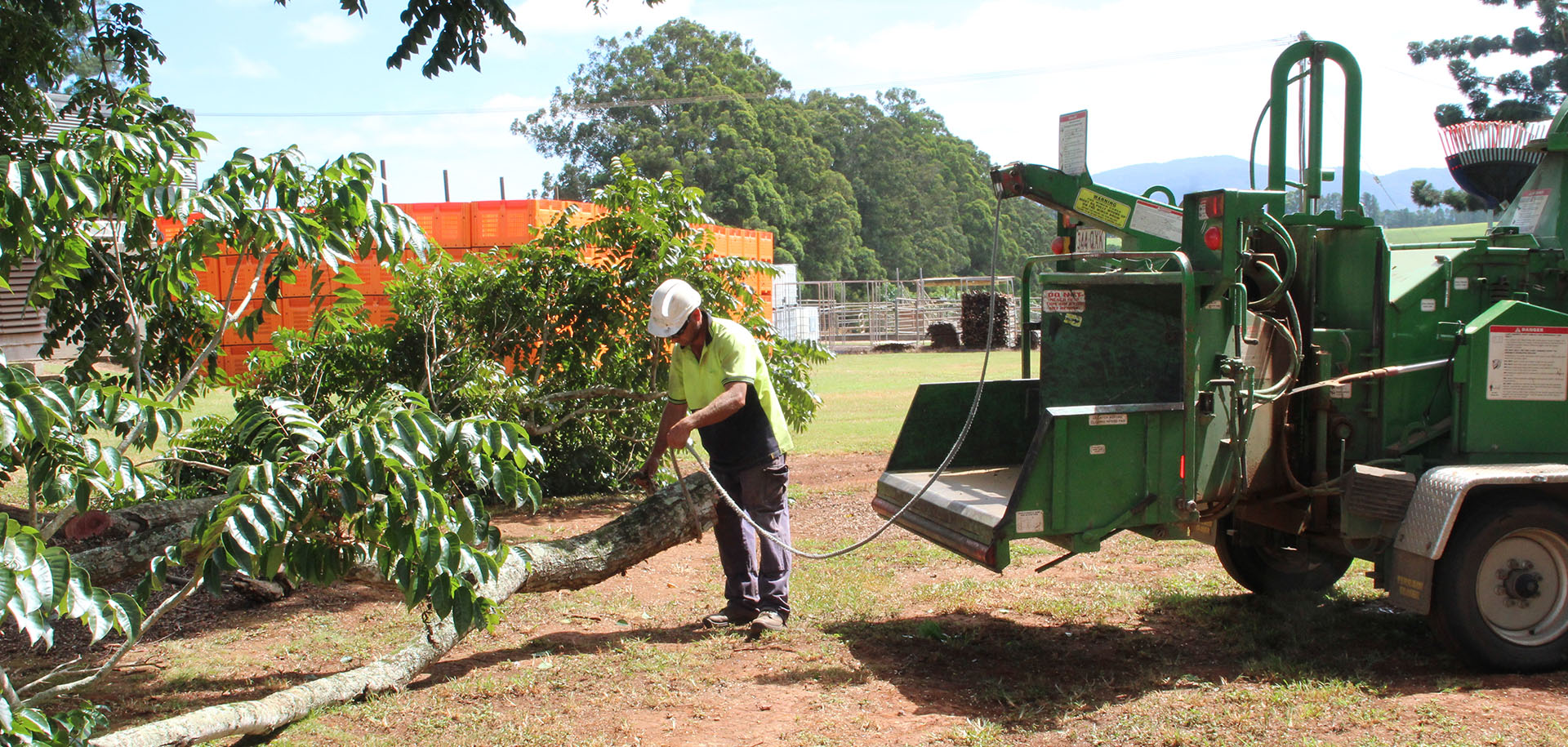 professional tree services Atherton